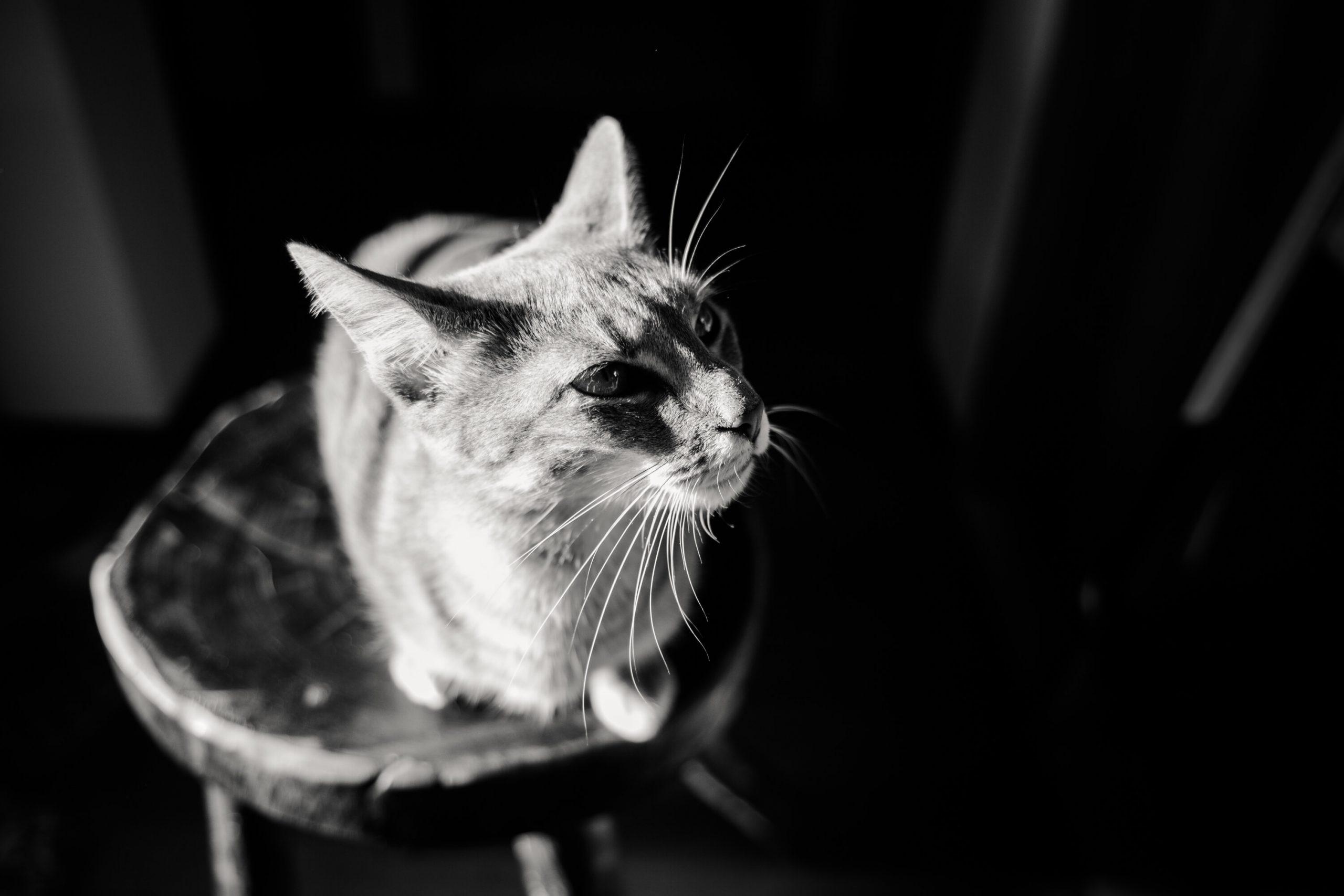 Ensaio Casal em casa com gato